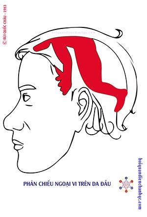 Đồ Hình Diện Chẩn - Phản Chiếu Ngoại Vi trên Đầu
