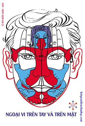 Đồ Hình Diện Chẩn - Phản Chiếu Ngoại Vi trên tay và trên mặt