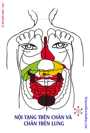 Đồ Hình Diện Chẩn - Phản Chiếu Nội Tạng trên Chân và phản chiếu chân trên lưng
