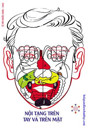 Đồ Hình Diện Chẩn - Phản Chiếu Nội Tạng trên Tay và trên mặt