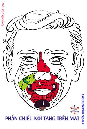 Đồ Hình Diện Chẩn - Phản Chiếu Nội Tạng trên mặt