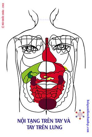 Đồ Hình Diện Chẩn - Phản Chiếu Nội Tạng trên tay và phản chiếu tay trên lưng